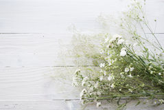 Λουλούδια Gypsophila στο ξύλινο υπόβαθρο Στοκ Εικόνα