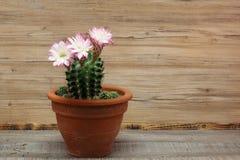Λουλούδια Kakteen Στοκ φωτογραφίες με δικαίωμα ελεύθερης χρήσης