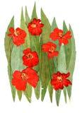Λουλούδια kosmeya Applique στα πράσινα φύλλα Στοκ φωτογραφία με δικαίωμα ελεύθερης χρήσης