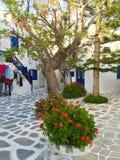 Λουλούδια Mikinos Στοκ Φωτογραφίες