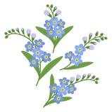 Λουλούδια Myosotis Στοκ εικόνες με δικαίωμα ελεύθερης χρήσης