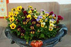 Λουλούδια Pansy σε μια οδό βάζων Στοκ εικόνες με δικαίωμα ελεύθερης χρήσης