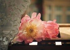 Λουλούδια Peony κρητιδογραφιών Στοκ εικόνες με δικαίωμα ελεύθερης χρήσης