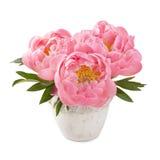 Λουλούδια Peony Στοκ φωτογραφία με δικαίωμα ελεύθερης χρήσης
