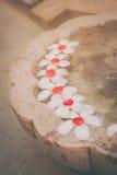 Λουλούδια Plumaria ή Frangipani που επιπλέουν στο νερό Στοκ φωτογραφία με δικαίωμα ελεύθερης χρήσης