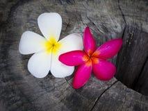 Λουλούδια Plumaria ηλικίας σε ξύλινο Στοκ φωτογραφία με δικαίωμα ελεύθερης χρήσης