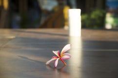 Λουλούδια Plumeria ή Frangipani ή Templetree στο ξύλινο επιτραπέζιο πνεύμα Στοκ Εικόνες
