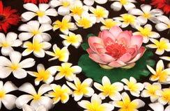 Λουλούδια Plumeria και λωτού στο νερό Στοκ Εικόνες