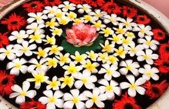 Λουλούδια Plumeria και λωτού στο νερό Στοκ Φωτογραφίες