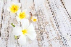 Λουλούδια Plumeria σε ένα ξύλινο υπόβαθρο Στοκ Φωτογραφίες