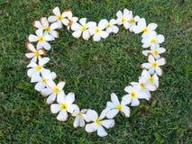 Λουλούδια Plumeria στη μορφή καρδιών στη χλόη Στοκ φωτογραφίες με δικαίωμα ελεύθερης χρήσης