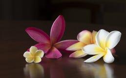 Λουλούδια Plumeria στον πίνακα Στοκ Εικόνες