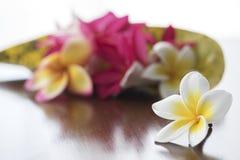 Λουλούδια Plumeria στον πίνακα Στοκ φωτογραφίες με δικαίωμα ελεύθερης χρήσης