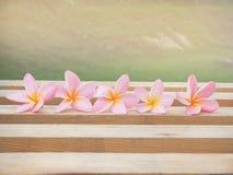 Λουλούδια Plumeria στο ξηρό ξύλο Στοκ εικόνες με δικαίωμα ελεύθερης χρήσης