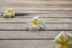 Λουλούδια Plumeria στο ξύλινο πάτωμα Στοκ Φωτογραφία
