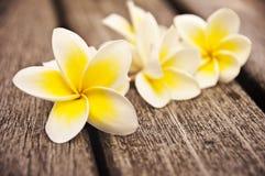 Λουλούδια Plumeria στο ξύλινο πάτωμα Στοκ εικόνες με δικαίωμα ελεύθερης χρήσης