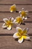 Λουλούδια Plumeria στο ξύλινο πάτωμα Στοκ φωτογραφία με δικαίωμα ελεύθερης χρήσης