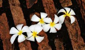 Λουλούδια Plumeria στο πάτωμα τούβλου Στοκ εικόνα με δικαίωμα ελεύθερης χρήσης