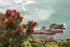 Λουλούδια Pohutukawa επάνω από τα ωκεάνια κύματα Στοκ Εικόνα
