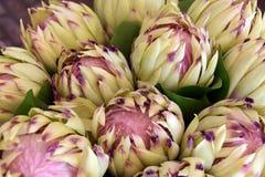 Λουλούδια Protea Στοκ Φωτογραφίες