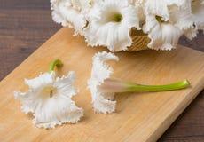 Λουλούδια serrulata Dolichandrone Στοκ Εικόνες