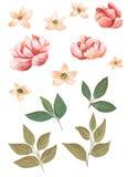 Λουλούδια Watercolor για το διαφορετικό σχέδιο απεικόνιση αποθεμάτων