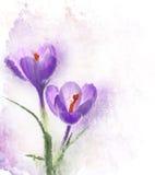 Λουλούδια Watercolor κρόκων Στοκ φωτογραφία με δικαίωμα ελεύθερης χρήσης