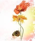 Λουλούδια Watercolor παπαρουνών Στοκ εικόνα με δικαίωμα ελεύθερης χρήσης