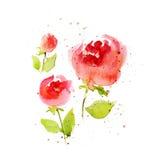 Λουλούδια Watercolor στο άσπρο υπόβαθρο απεικόνιση αποθεμάτων