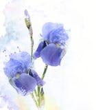 Λουλούδια Watercolor της Iris Στοκ εικόνες με δικαίωμα ελεύθερης χρήσης