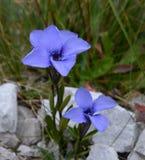 Λουλούδια Wlid Στοκ Εικόνες