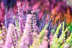 Λουλούδια XVIII χρωμάτων Στοκ φωτογραφία με δικαίωμα ελεύθερης χρήσης