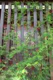 Λουλούδι, άμπελος κυπαρισσιών, δόξα αστεριών ή άμπελος κολιβρίων Στοκ φωτογραφίες με δικαίωμα ελεύθερης χρήσης