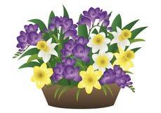 Λουλούδι άνοιξη - νάρκισσοι και freesia Στοκ Φωτογραφίες