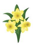 Λουλούδι άνοιξη - νάρκισσοι Στοκ Φωτογραφία