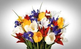 Λουλούδι άνοιξη στο άσπρο υπόβαθρο Στοκ εικόνα με δικαίωμα ελεύθερης χρήσης