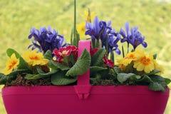 Λουλούδι άνοιξη trug στοκ εικόνες με δικαίωμα ελεύθερης χρήσης