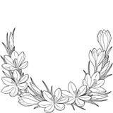 Λουλούδι άνοιξη vignett των κρόκων Στοιχεία που απομονώνονται διανυσματικά Γραπτή εικόνα για την ενήλικη χαλάρωση Εικόνα για το σ Στοκ εικόνες με δικαίωμα ελεύθερης χρήσης