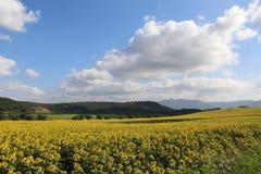 Λουλούδι ήλιων Στοκ φωτογραφία με δικαίωμα ελεύθερης χρήσης