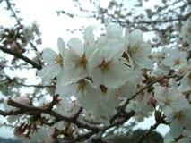 Λουλούδι αγάπης @ στοκ εικόνες