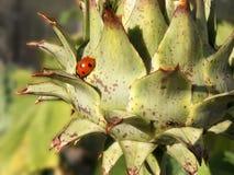 Λουλούδι αγκιναρών στοκ φωτογραφία με δικαίωμα ελεύθερης χρήσης