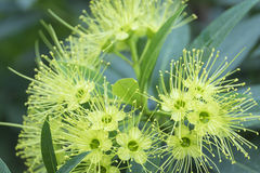 Λουλούδι ακίδων Στοκ εικόνα με δικαίωμα ελεύθερης χρήσης