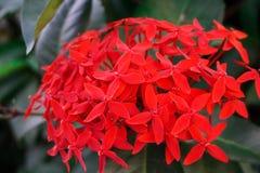 Λουλούδι ακίδων Στοκ Εικόνες