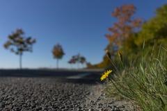 Λουλούδι ακρών του δρόμου Στοκ Φωτογραφίες