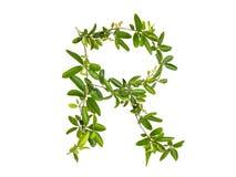Λουλούδι αναρριχητικών φυτών αλφάβητου που απομονώνεται Στοκ Εικόνα