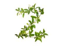 Λουλούδι αναρριχητικών φυτών αλφάβητου που απομονώνεται Στοκ Εικόνες