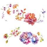 Λουλούδι απεικόνισης Watercolor στο απλό υπόβαθρο στοκ εικόνα