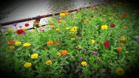 Λουλούδι από τη λίμνη Στοκ Εικόνα