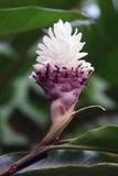 Λουλούδι από τη ζούγκλα Τροπικό τροπικό δάσος, Στοκ φωτογραφία με δικαίωμα ελεύθερης χρήσης
