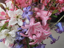 Λουλούδι από τον κήπο Στοκ Εικόνες